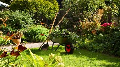 Prace ogrodnicze do wykonania w sierpniu