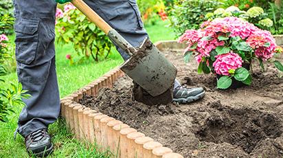 Jak i czym zakwasić ziemię dla hortensji?
