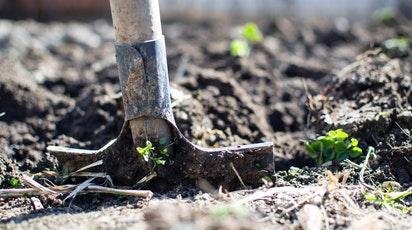 10 wskazówek dla początkującego ogrodnika