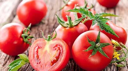 Jak zebrać kilogram pomidorów z jednego krzewu?