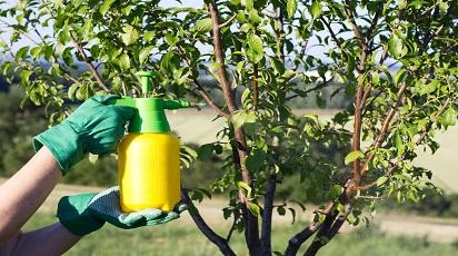 Zwalczanie chorób drzew i krzewów owocowych