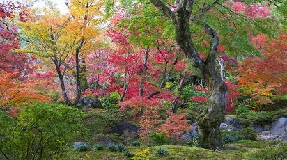 Drzewa, krzewy i pnącza ozdobne jesienią