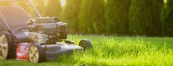 Letnia pielęgnacja trawnika