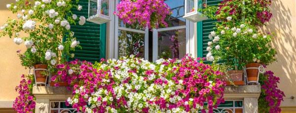 Najpiękniejsze pnącza na balkon i taras