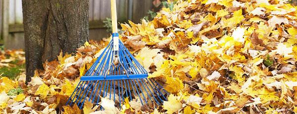 Sprzątanie liści w ogrodzie