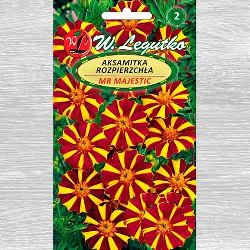 Aksamitka rozpierzchła o kwiatach pojedynczych Mr Majestic Legutko interface.image 1 interface.art 69552