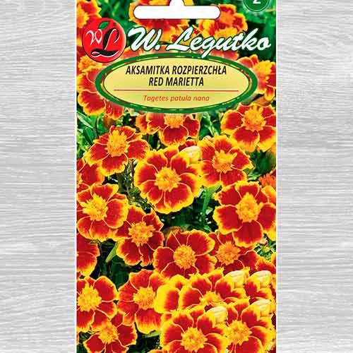 Aksamitka rozpierzchła o kwiatach pojedynczych Red Marietta Legutko interface.image 1 interface.art 69553