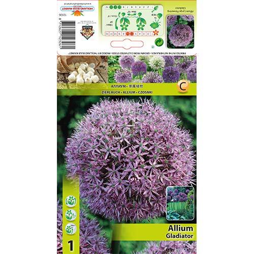 Czosnek (Allium) Gladiator interface.image 1 interface.art 67296