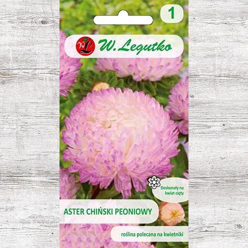 Aster chiński peoniowy biało-różowy Legutko interface.image 1 interface.art 78523
