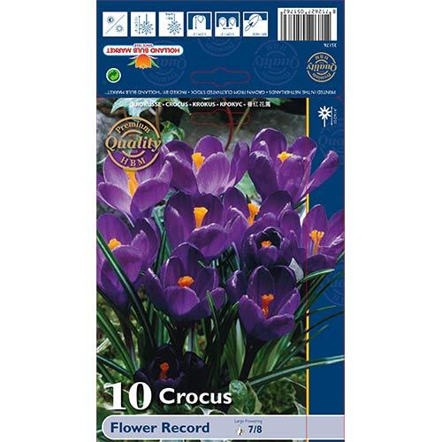 Krokus Flower Record interface.image 1 interface.art 67330