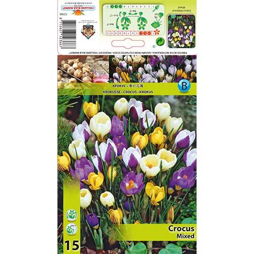 Krokus botaniczny, mix kolorów interface.image 1 interface.art 67333