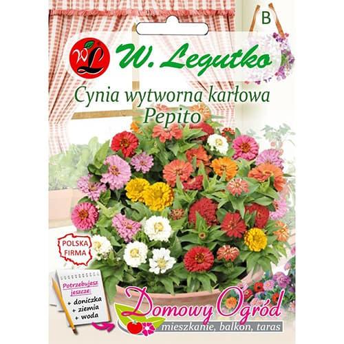 Cynia wytworna karłowa Pepito, mieszanka Legutko interface.image 1 interface.art 69659