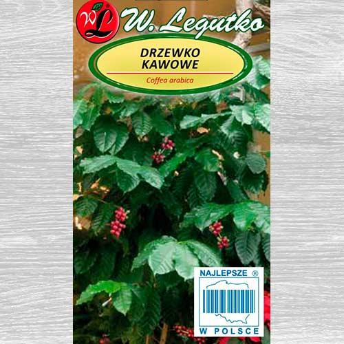 Drzewko kawowe Legutko interface.image 1 interface.art 69583