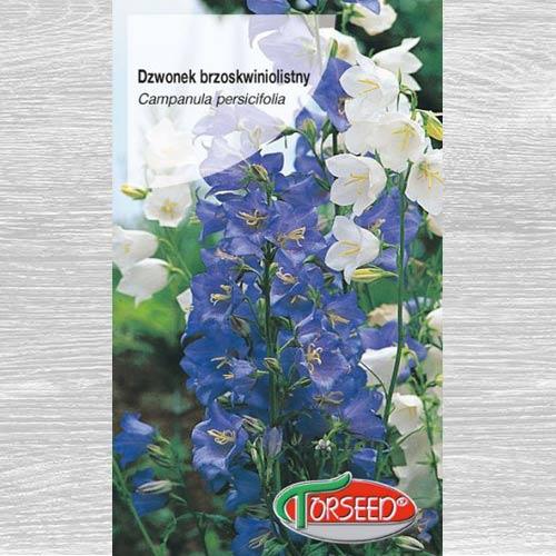 Dzwonek brzoskwiniolistny, mieszanka interface.image 1 interface.art 77526