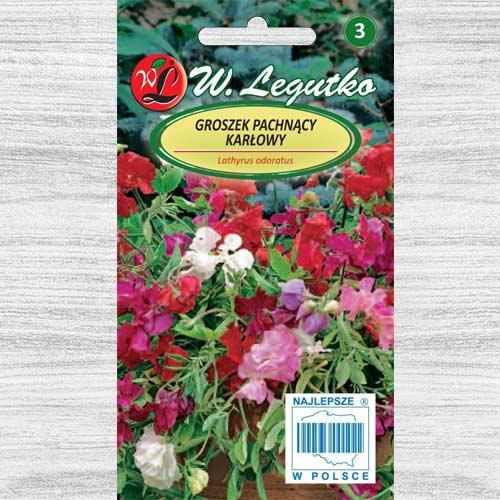 Groszek pachnący karłowy, mieszanka Legutko interface.image 1 interface.art 78566