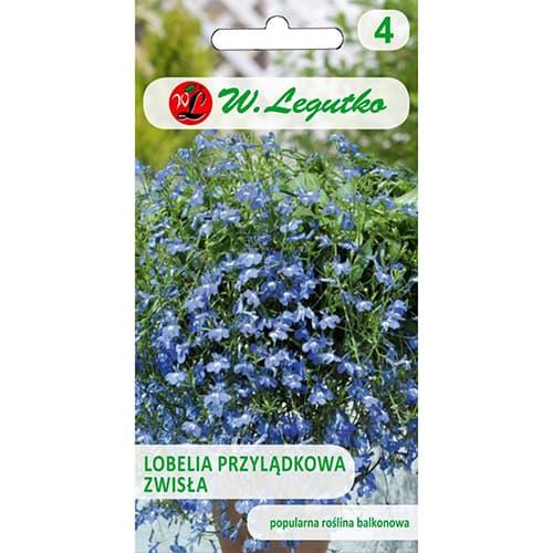 Lobelia przylądkowa zwisła niebieska Legutko interface.image 1 interface.art 69599