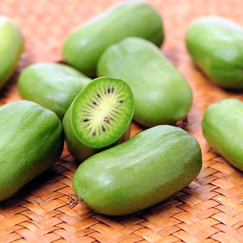 Mini kiwi (aktinidia) Issai