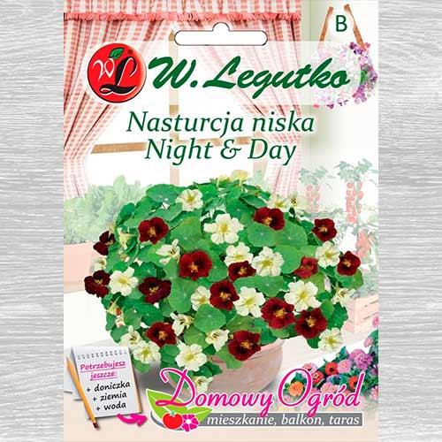 Nasturcja niska Night & Day Legutko interface.image 1 interface.art 69661