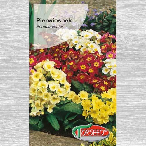 Pierwiosnek wzniosły (Primula), mieszanka interface.image 1 interface.art 77578