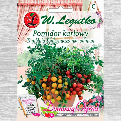 Pomidor gruntowy karłowy Tumbling Tom Legutko interface.image 1 interface.art 69651