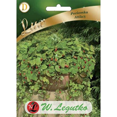 Poziomka Attila Legutko interface.image 1 interface.art 69663
