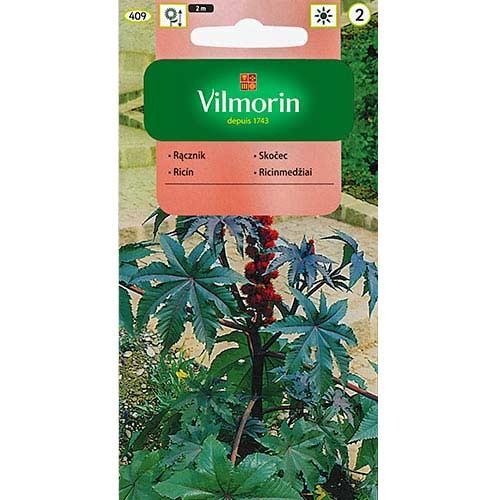 Rącznik czerwonolistny Vilmorin interface.image 1 interface.art 77684