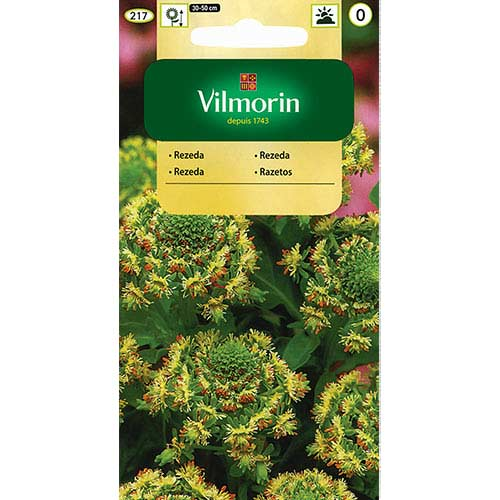 Rezeda wonna wielkokwiatowa, mieszanka Vilmorin interface.image 1 interface.art 77685