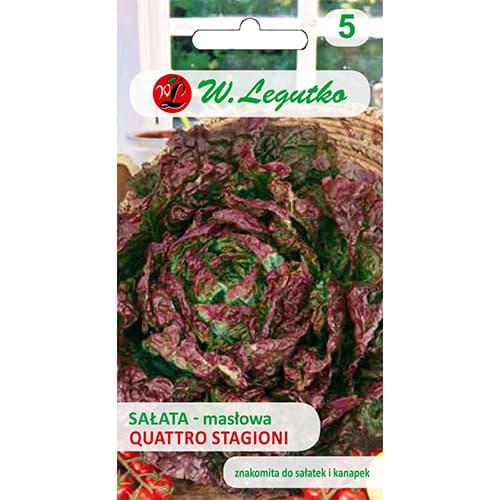 Sałata głowiasta masłowa Quattro stagioni Legutko interface.image 1 interface.art 69540