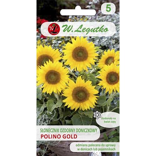 Słonecznik ozdobny doniczkowy Polino Gold Legutko interface.image 1 interface.art 69628
