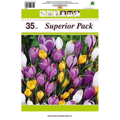 Super oferta! Krokus botaniczny mix kolorów, zestaw 35 cebul interface.image 1 interface.art 67911
