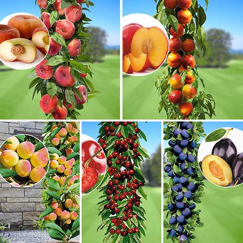 Super Oferta! Zestaw Owoce lata, 5 drzewek interface.image 1 interface.art 1956