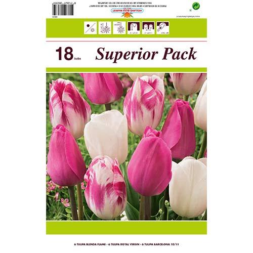 Super oferta! Tulipan Morning Star, zestaw 18 cebul interface.image 1 interface.art 67560