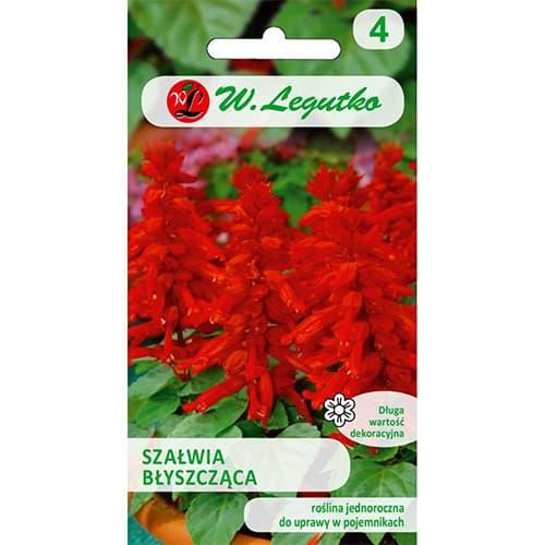 Szałwia błyszcząca czerwona Legutko interface.image 1 interface.art 78589