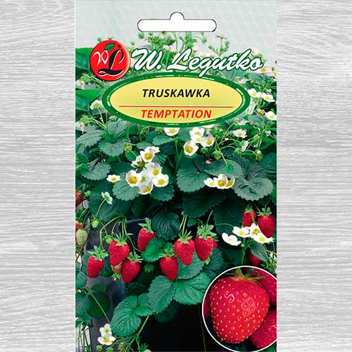 Truskawka Temptation Legutko interface.image 1 interface.art 69548