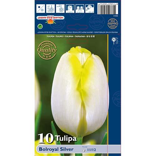 Tulipan Triumph Bolroyal Silver interface.image 1 interface.art 67706