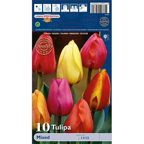 Tulipan Darwina, mix kolorów interface.image 1 interface.art 67878