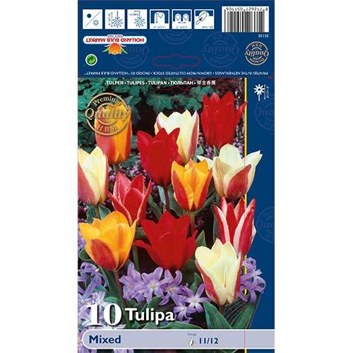 Tulipan Greiga, mix kolorów interface.image 1 interface.art 67872