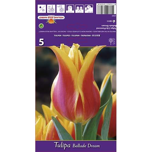 Tulipan liliokształtny Ballade Dream interface.image 1 interface.art 67477