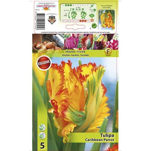 Tulipan papuzi Carribean Parrot interface.image 1 interface.art 67491