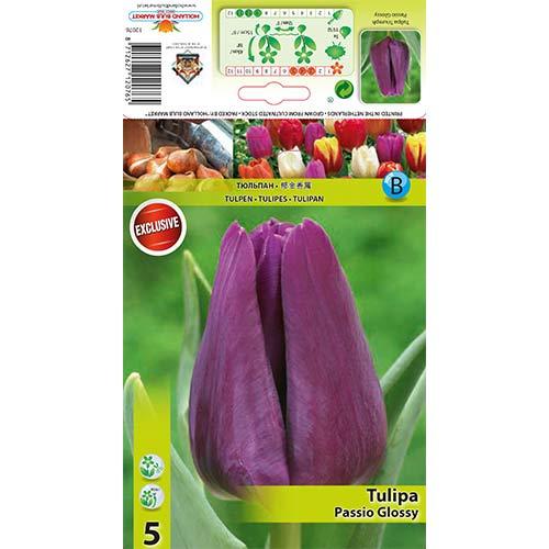 Tulipan Triumph Passio Glossy interface.image 1 interface.art 67786