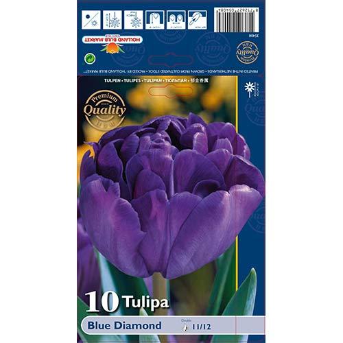 Tulipan pełny Blue Diamond interface.image 1 interface.art 67769