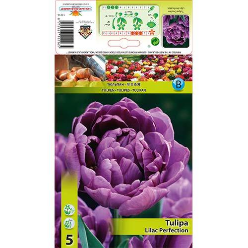 Tulipan pełny Lilac Perfection interface.image 1 interface.art 67460