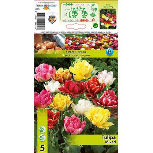 Tulipan pełny, mix kolorów