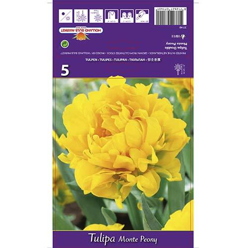 Tulipan pełny Monte Peony interface.image 1 interface.art 67775