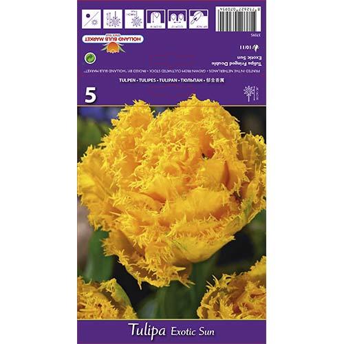 Tulipan strzępiasty Exotic Sun interface.image 1 interface.art 67698