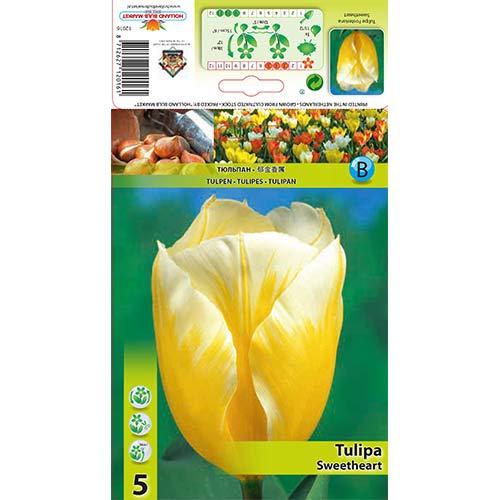Tulipan Fostera Sweetheart interface.image 1 interface.art 67830