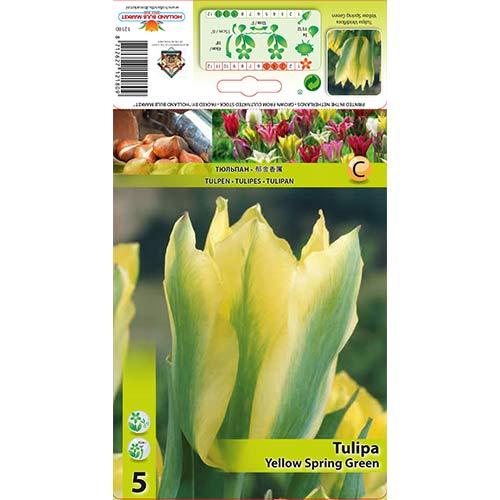 Tulipan Viridiflora Yellow Spring Green interface.image 1 interface.art 67735