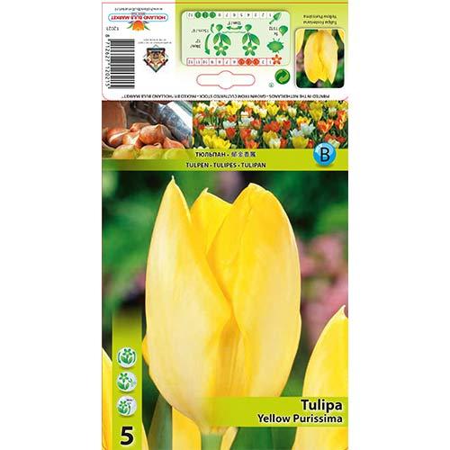 Tulipan Fostera Yellow Purissima interface.image 1 interface.art 67734