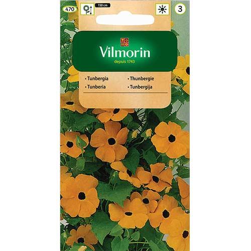 Tunbergia oskrzydlona, mieszanka Vilmorin interface.image 1 interface.art 77689