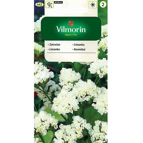 Zatrwian wrębny biały Vilmorin interface.image 1 interface.art 77691